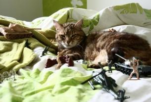 """Russian """"Little Green Men"""" Memorial Gets Cat Treatment"""