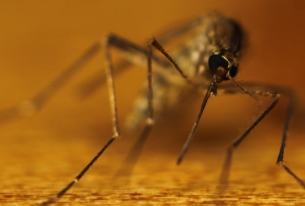 A New Cure for Malaria?