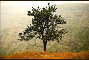 Growing hope in India