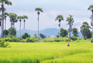 Southeast Asia 2012: Year in Review