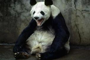 Angry Panda: Obama Meets with Dalai Lama, China Throws a Temper Tantrum