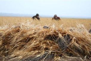Sanctions Block Syria's Vital Grain Trade