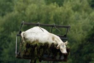 "Argentina's ""Dead Cow"" Bounce"