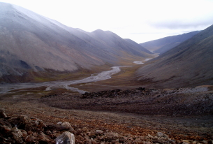 Medvedev establishes environmental buffer zone around Wrangel Island