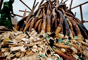 Security Context of Illegal Wildlife Trade in East Africa