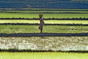 Uniting Food Security and Economic Growth in Africa