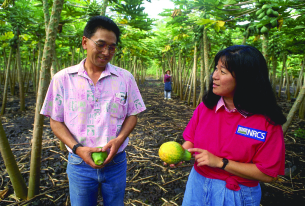 Hawaii's GMO ban follows in Europe's footsteps