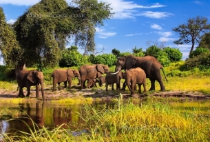 Trend of Trophy Hunting Ban is Promising for African Wildlife
