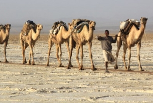 """The Corroding """"Lead Camel"""" Effect"""