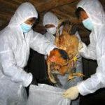 H1N5 research