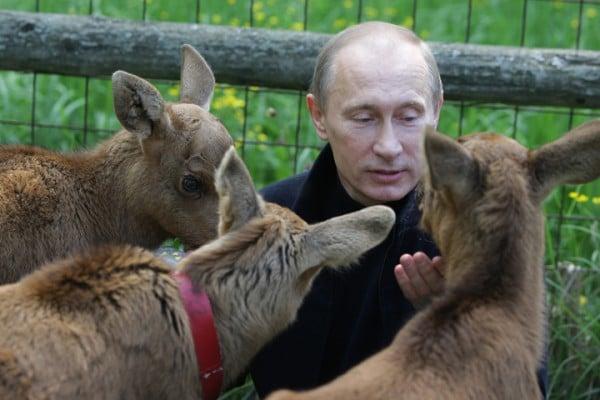 Putin_animals