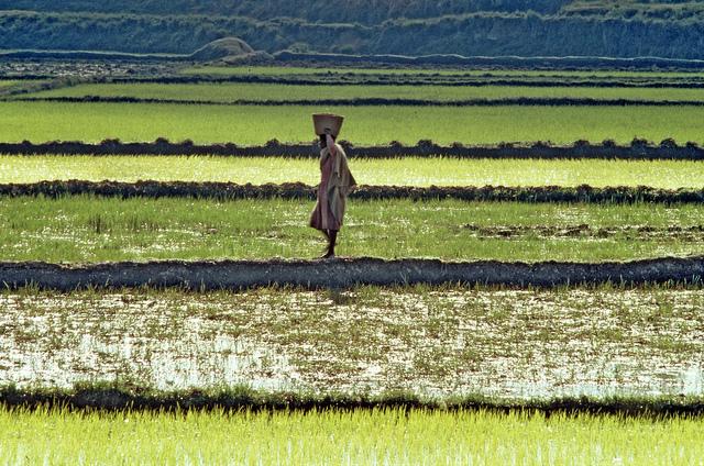 Rice farmer in Madagascar | Photo Credit: UN Photo / Lucien Rajaonin
