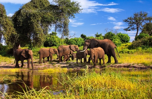 Phototourist safaris vastly outgross hunting, prompting certain countries in Africa to pull the plug on the trophy hunting industry.