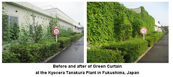greencurtain1