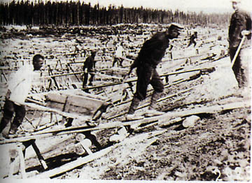 thesis on gulags Gulag: a history is a narrative account of the origins and development of the soviet concentration camps, from lenin to gorbachev based on archives, interviews, new.