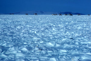 Alaskan tundra in winter. U.S. Fish & Wildlife Service.